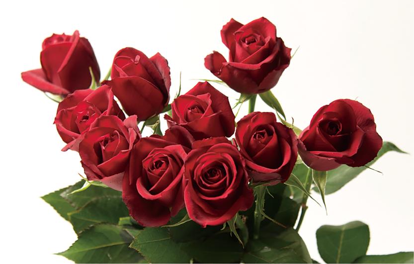 平塚のバラ